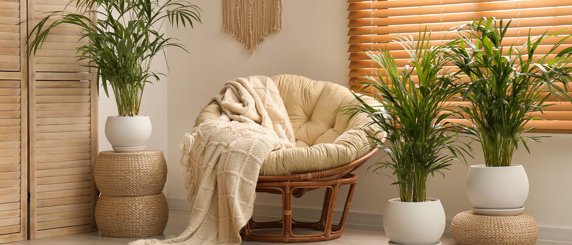 La pianta che regola l'umidità in casa