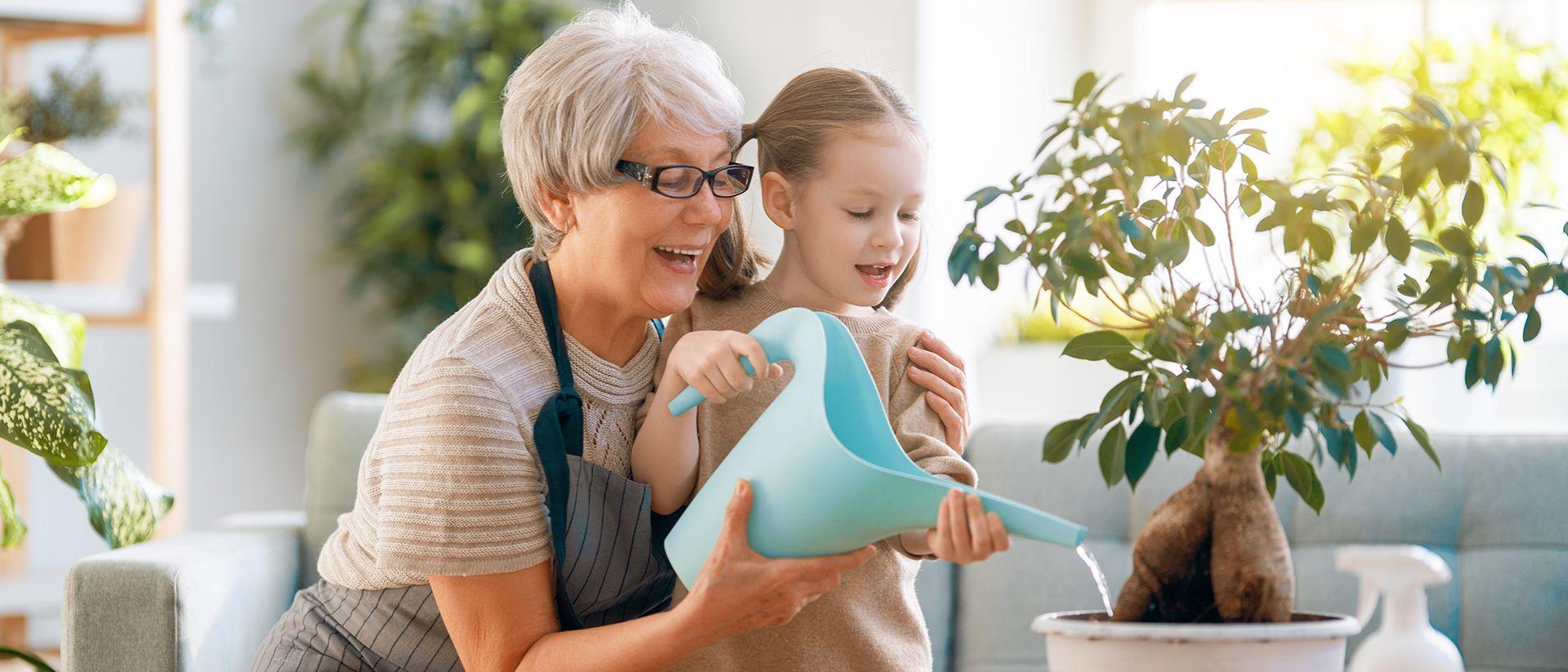 Le piante che aiutano a migliorare la qualità dell'aria di casa